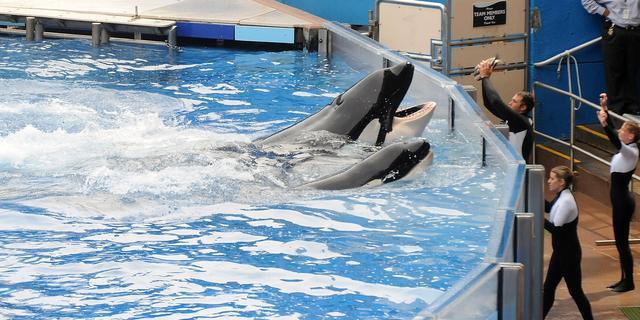 SeaWorld infiltreerde bij dierenactivisten