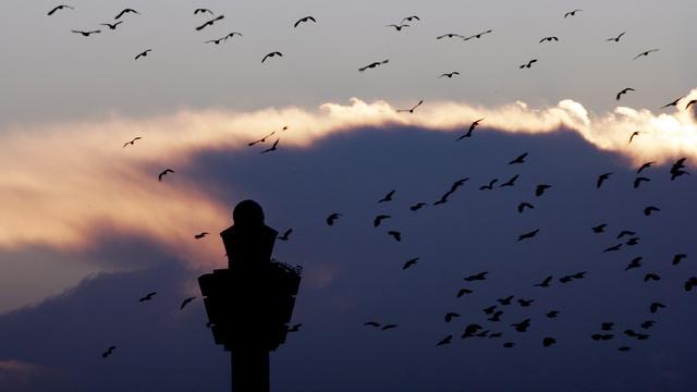 'Door zachte weer meer botsingen met vogels op Schiphol'