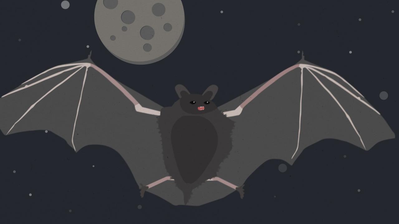 Waarom komen dodelijke virussen vaak van vleermuizen?