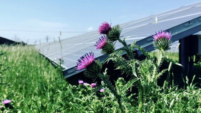 Onverwachte toename van aantal insecten in groot Gronings zonnepark