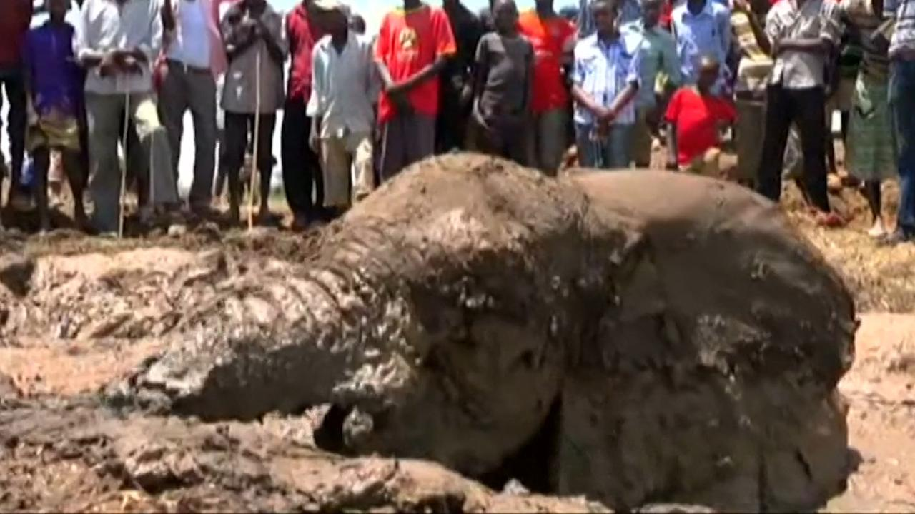 Jonge olifanten uit Keniaanse modder gered