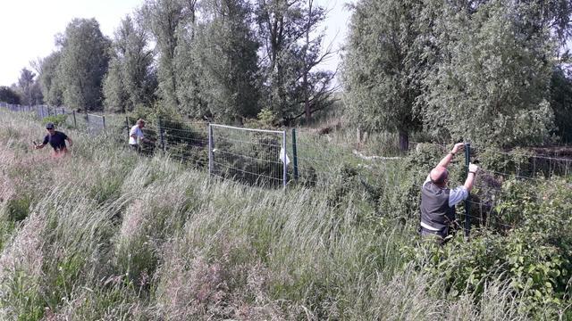 Herten op A6 doodgeschoten na doorknippen hekken Oostvaardersplassen