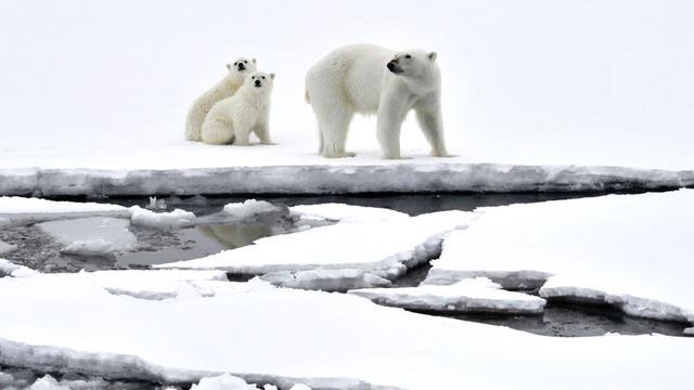 Oudste en dikste Noordpoolijs smelt nu ook