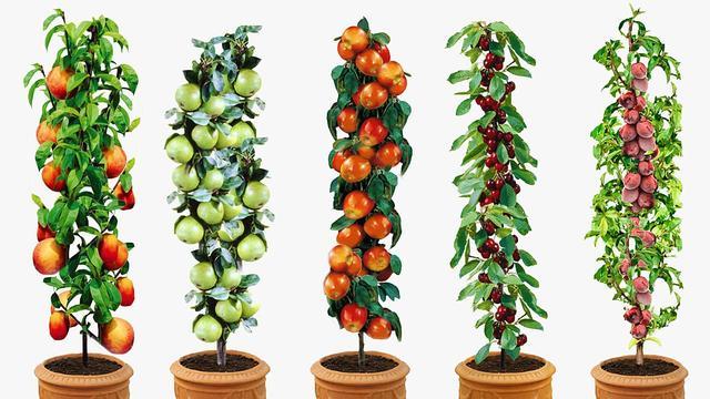 Set van 5 of 10 fruitbomen vanaf 31,95 euro