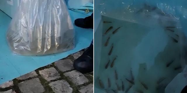 Politie Amsterdam treft vloeibare cocaïne aan bij lading levende vissen