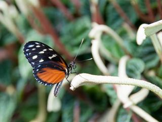 'Het lijkt erop dat veel vlinders het niet redden, omdat veel planten zijn verdroogd'