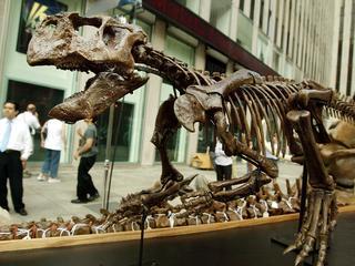 Steeds meer bekend over kleuren van dinosauriërs