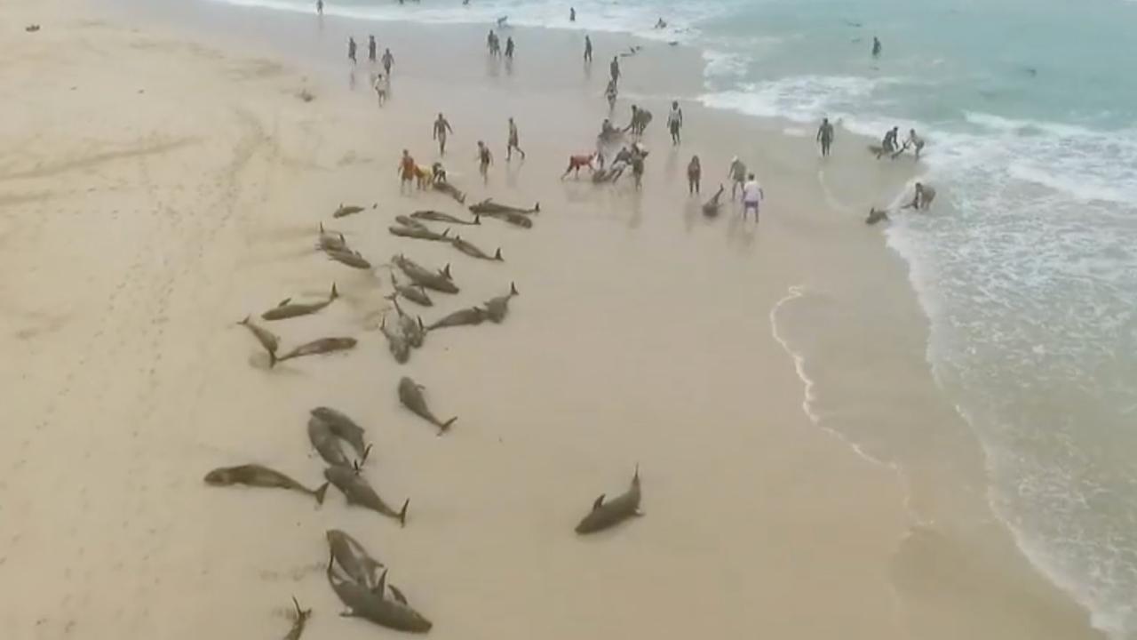 Ruim 130 witlipdolfijnen spoelen aan op Kaapverdisch eiland
