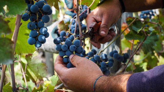 Recordbedrag opgehaald tijdens jaarlijkse wijnveiling Franse Beaune