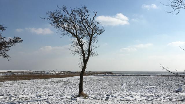 Vrieskou in maart: 'Dit soort periodes gaan we vaker krijgen'