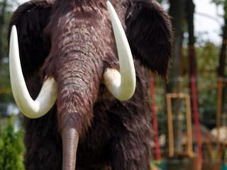 Arctische mammoet werd 45.000 jaar geleden geslacht met speren