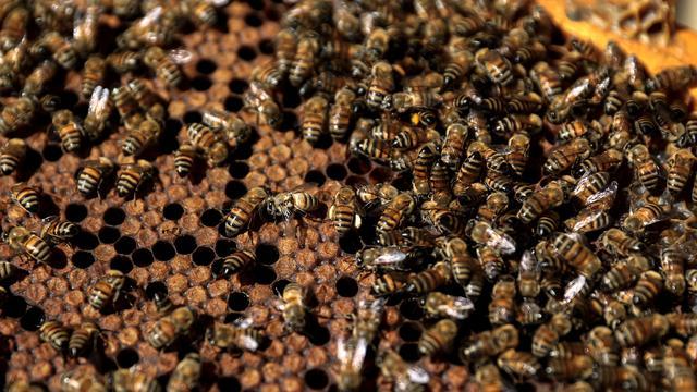 Torenhoge honingprijzen trekken criminelen in Nieuw-Zeeland
