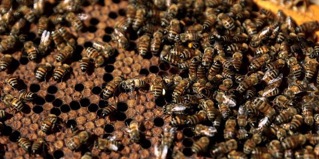 'Natuur ernstig in gevaar door wereldwijde afname van insectensoorten'