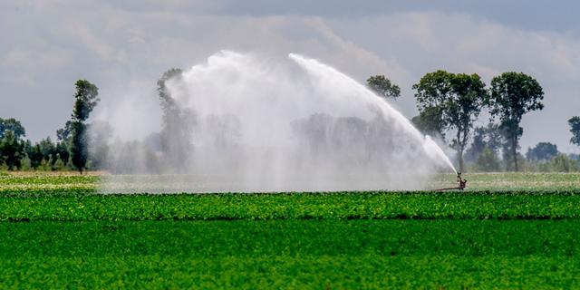 Lage grondwaterstand in Oost- en Zuid-Nederland door uitblijven neerslag