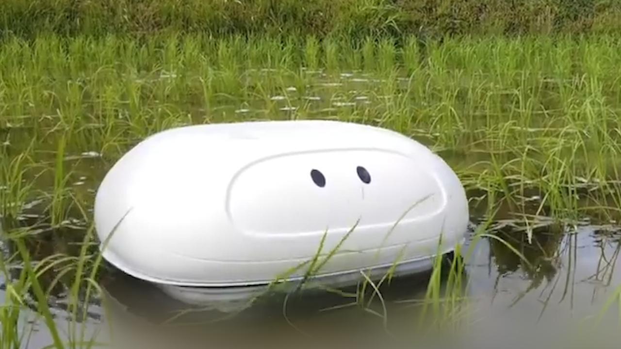Roboteend bestrijdt onkruid en ongedierte op rijstvelden