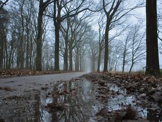 Boswachters tot volgende week druk bezig met vrijmaken paden