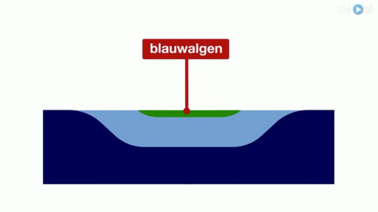 Wat is blauwalg?
