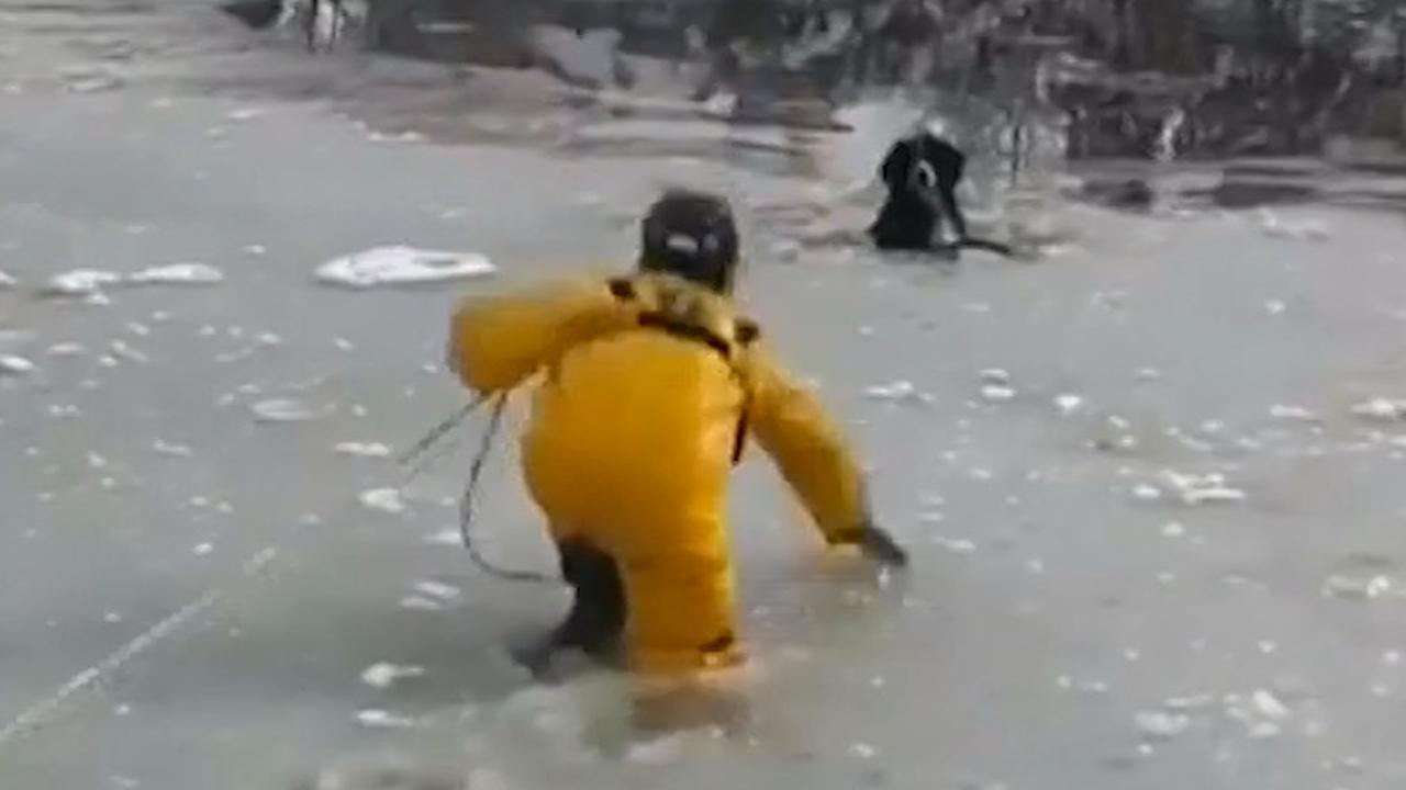 Brandweerman redt hond uit wak in Colorado
