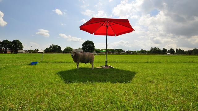 Extreme zomerhitte in Nederland neemt veel sneller toe dan verwacht