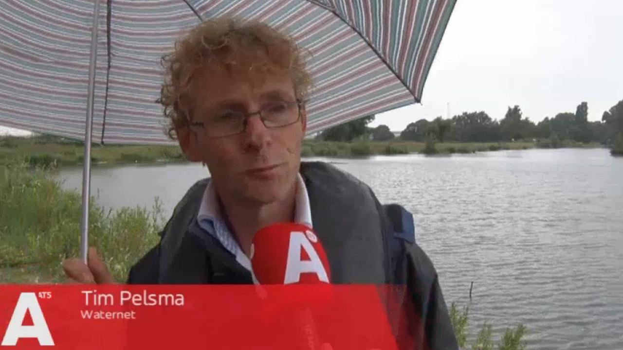 Rifkorven in het Noordzeekanaal