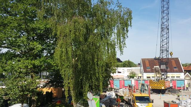 Bomen in Zeeheldenbuurt lijken gered