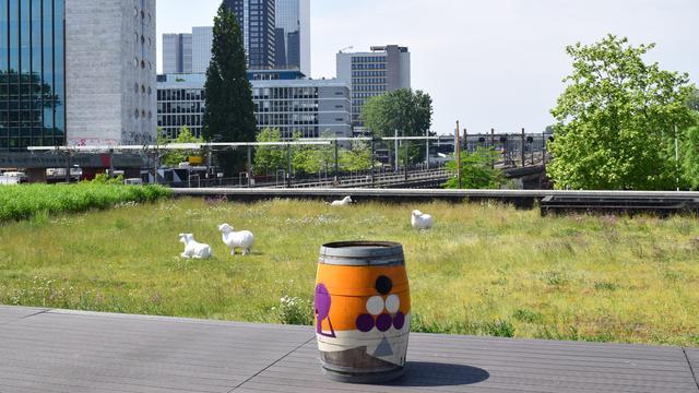 Nieuw in Rotterdam: wandelroute over bijzondere daken