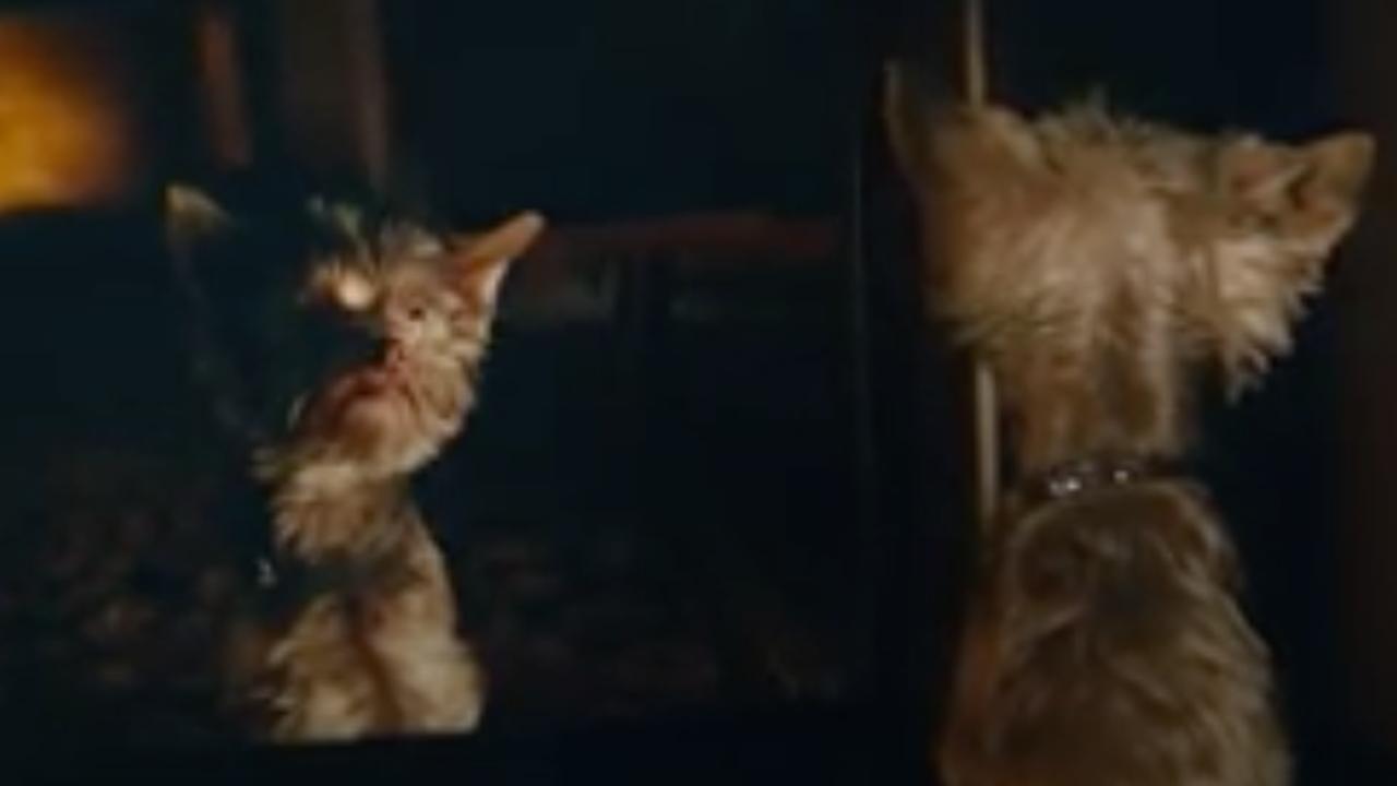 Staatsloterij-reclame met 'lelijk' hondje Frekkel
