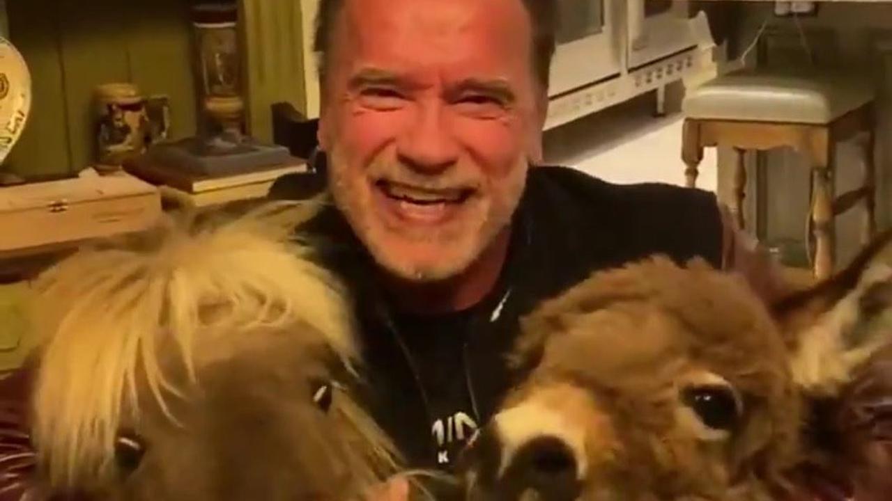 Schwarzenegger verwelkomt paard en ezel in huis tijdens isolatie