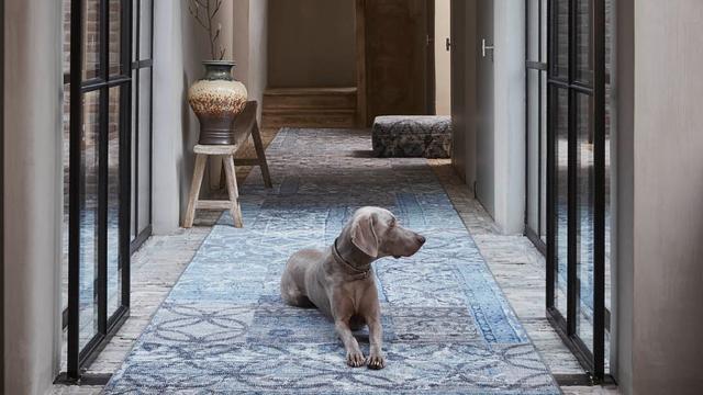 Een tapijt blijft vergt meer onderhoud dan laminaat of pvc.