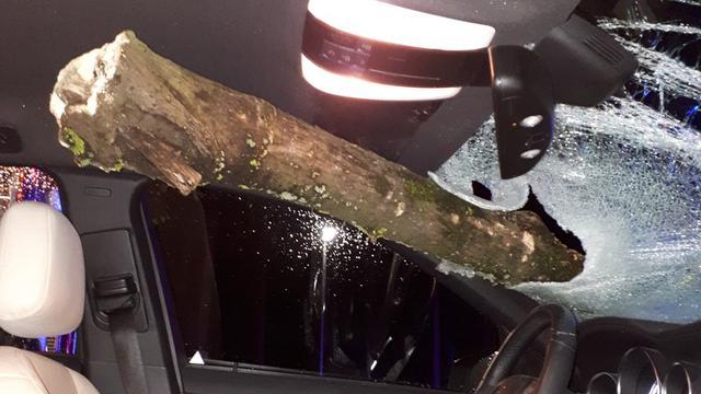Automobilist naar ziekenhuis nadat tak voertuig doorboort in Oosterhout