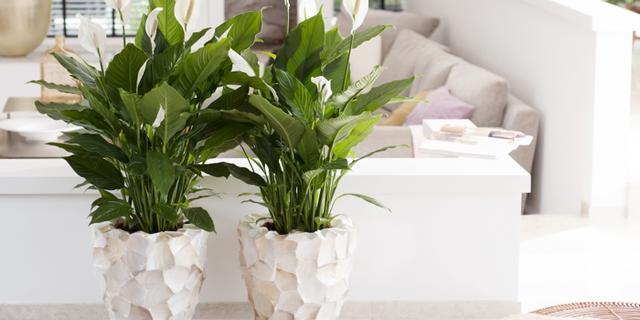 Zorg voor extra sfeer in huis en tuin met deze planten en bomen