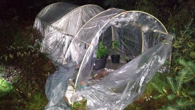 Politie Epe vervangt wietplanten door dennenboompjes