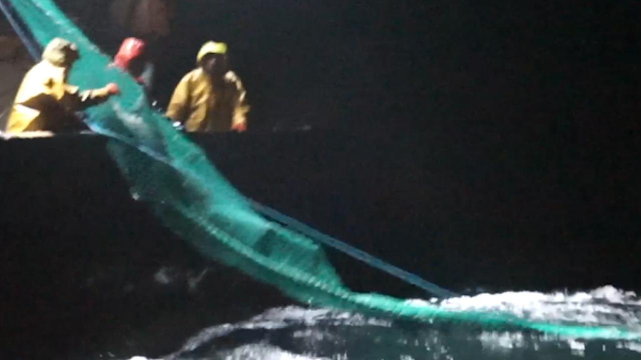 Sea Shepherd filmt vissers die dolfijnen vangen in netten
