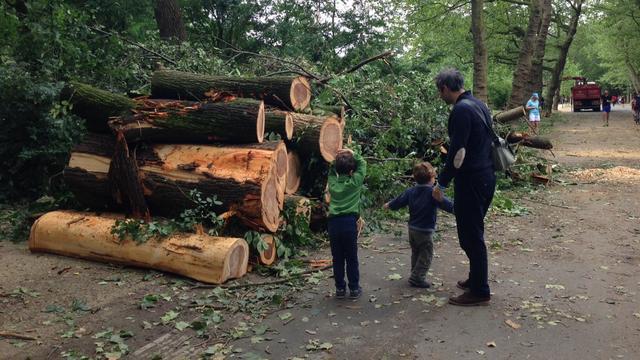 Honderden meldingen van omgewaaide bomen door storm