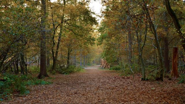 'Bos- en houtsector wil 100.000 hectare nieuw bos bouwen in Nederland'