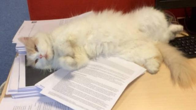 Kat Doerak krijgt eigen 'studentenkaart'