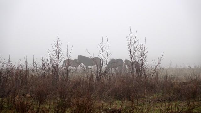 Weerbericht: Ochtend begint met dichte mist, later zon