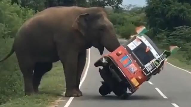Olifant duwt tuktuk van Ierse toerist omver in Sri Lanka