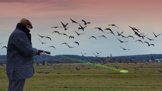 Provincies starten landelijke proef met laser om ganzen te verjagen