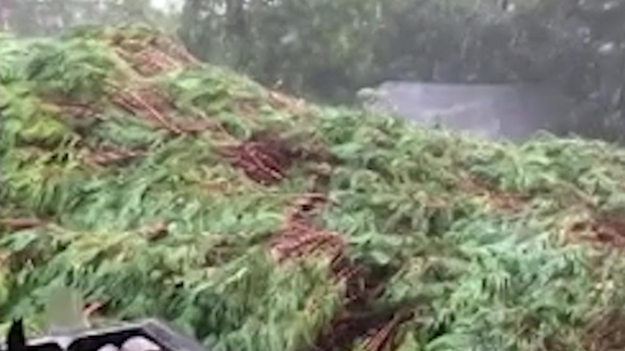 Noodweer in Sydney: boom valt bijna op huis gezin