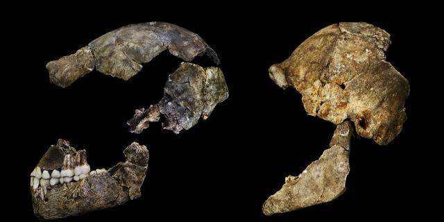 Resten nieuwe mensachtige soort ontdekt in Zuid-Afrika