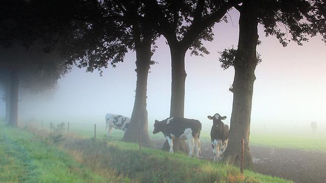 Het weer: Mist in noorden verdwijnt, lokaal een bui