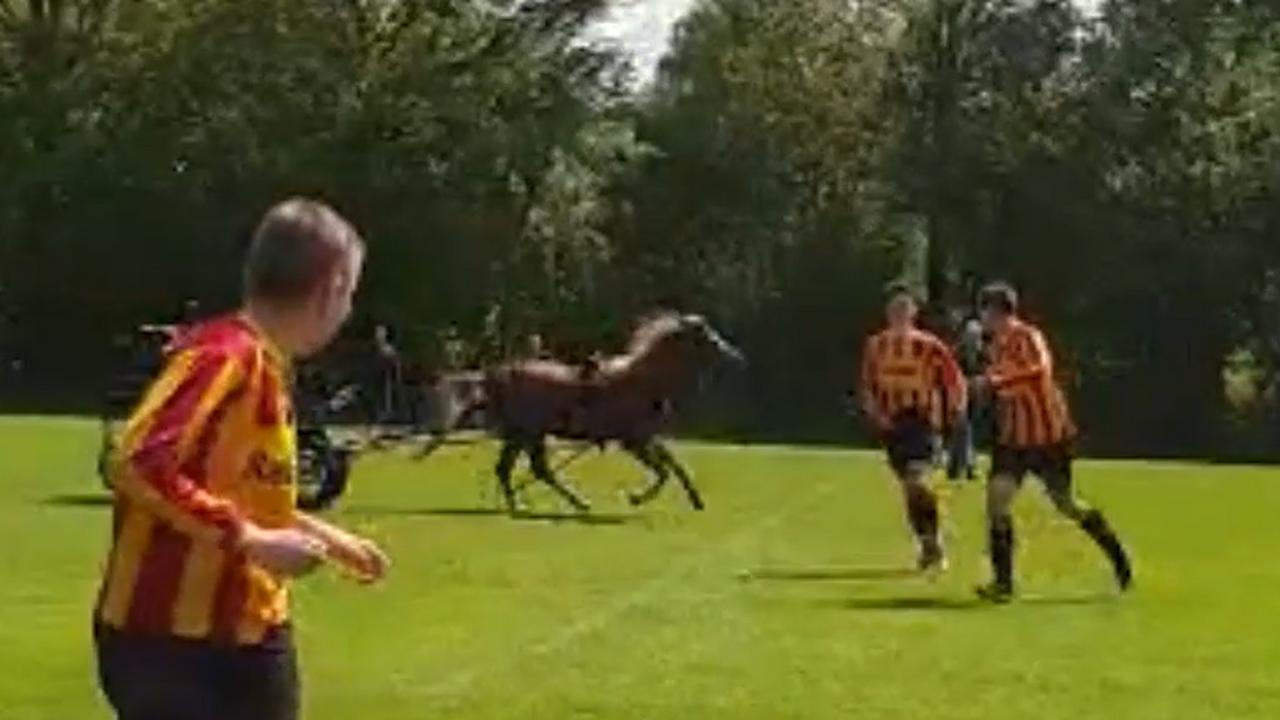 Op hol geslagen paard verstoort voetbalwedstrijd in Eext