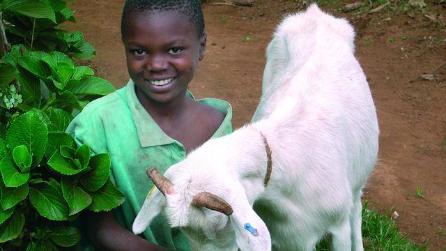 Transparant Prijs voor Stichting Heifer