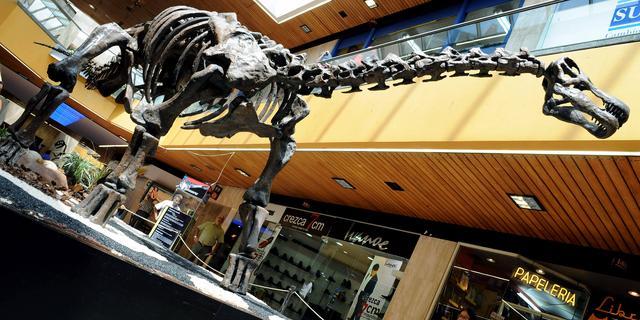 In Australië ontdekte megadinosaurus blijkt na vijftien jaar nieuwe soort