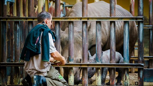 Goed nieuws: Witte neushoorn geboren | Testcapaciteit verder uitgebreid