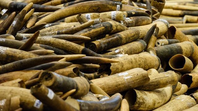 Verenigd Koninkrijk verbiedt verkoop alle producten van ivoor