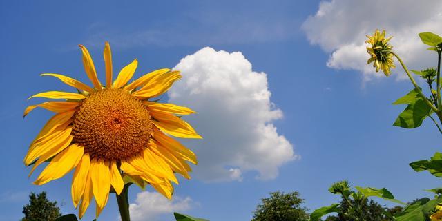 Zondag mogelijk tropisch warm in delen van Nederland