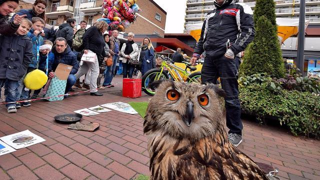 Gemeente ontmoedigt roofvogelshows in Leiden