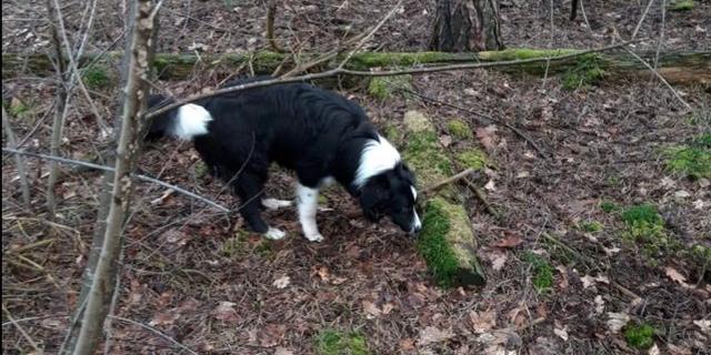 Bij Oss gestolen hond dood teruggevonden, politie worstelt met onderzoek